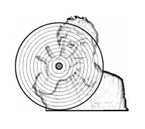 logo_Synékine